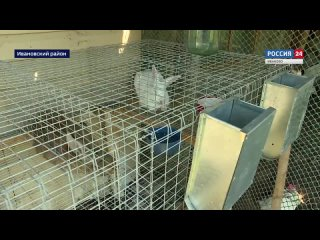 Видео от Департамент с/х и продовольствия Ивановской обл.