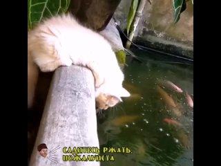Кот-говорун