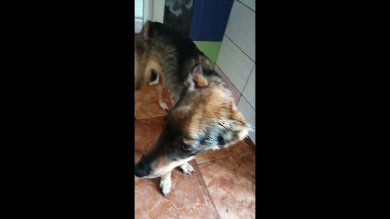 Собака с Автотранспортной 29 09 21