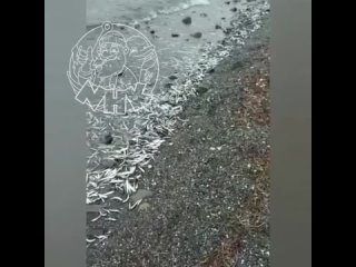 #отподписчикаСегодня по всему пляжу от Золотарей ...