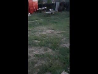 В Якутии лиса сдружилась с собакой и проникла во двор
