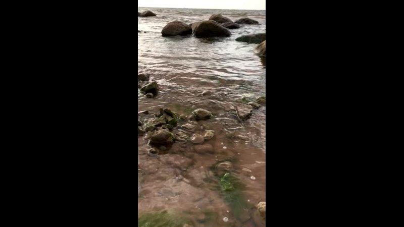 Видео от МОУ Загривская СОШ