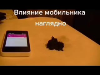 1_4920253300948861421.mp4
