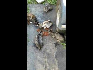 Видео от ЛЕССИ - Помощь бездомным животным г. Пикалево.