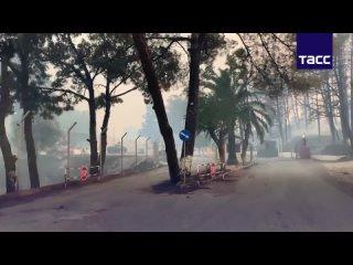 Лесные пожары в Греции. Огонь охватил Средиземноморье