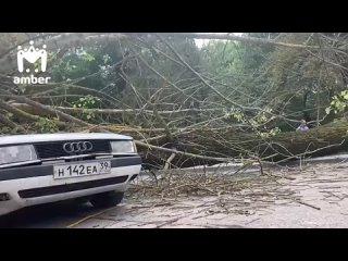На пересечении Ялтинской и Московского проспекта дерево оборвало ЛЭП