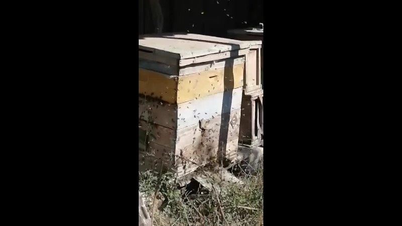 Видео от Коляна Свириденко