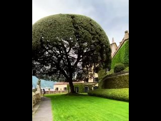Umbrella tree   Share your photos with us and we will post them in our account. Apply for .mp4
