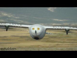 Квадрокоптер сова-шпион