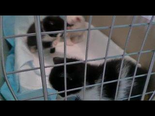 Vídeo de Бездомные животные Майкопа,сообщество волонтеров