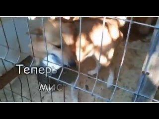 Video by Кошки и собаки Территории добра