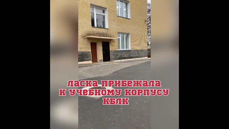 Видео от Владимира Беляева