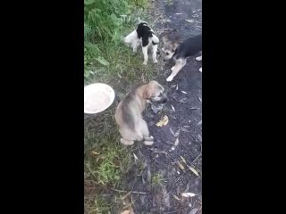 Видео от Татьяны Скрябневой