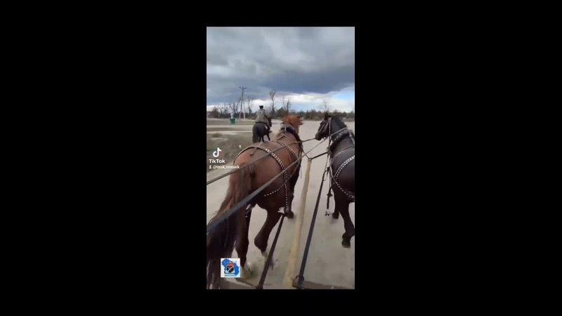 Казачья поляна Прогулки на лошадях