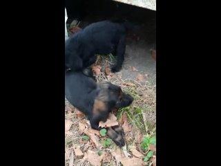 Видео от Помощь подопечным животным Е. Марковой(Абхазия)и