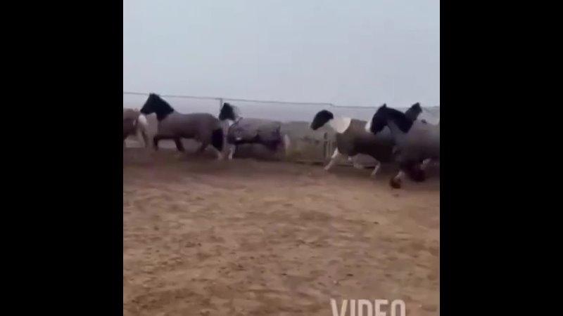 Видео от Соседи