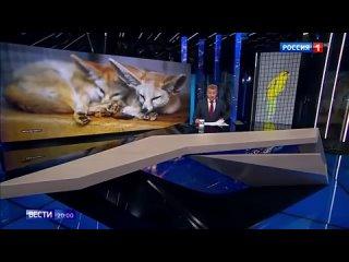 В Госдуму внесены поправки к закону об ответственном обращении с животными.