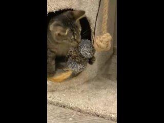 Видео от Котята-смертники! НУЖНА ПОМОЩЬ!!!
