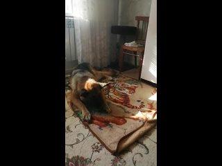 Видео от Анжелика Ивашечкина