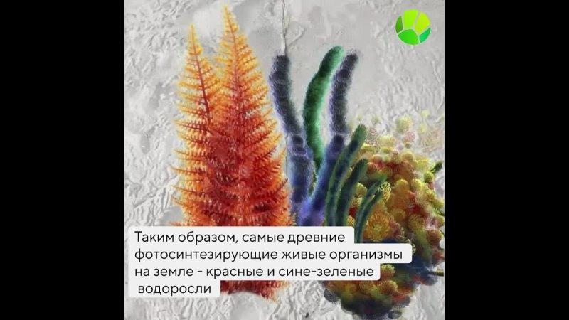 Как появились первые растения