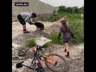 Велосипедисты спасли от смерти пса, у которого на ...