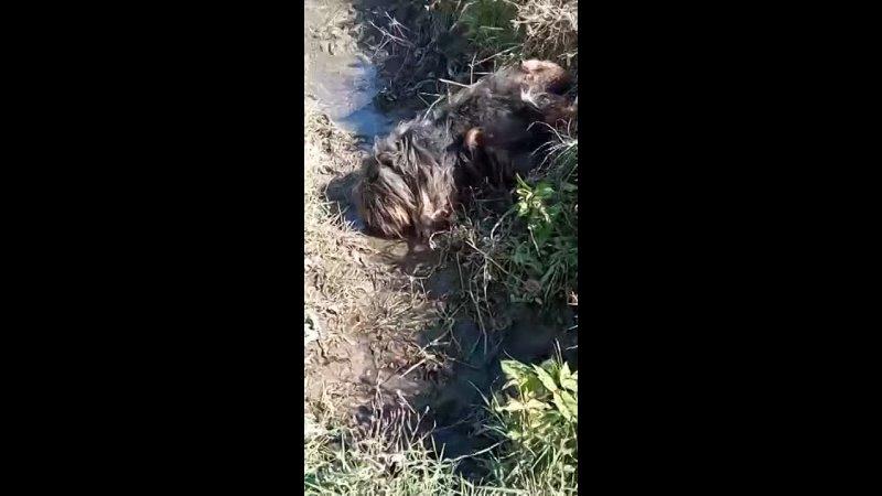 Видео от Подслушано Сибай