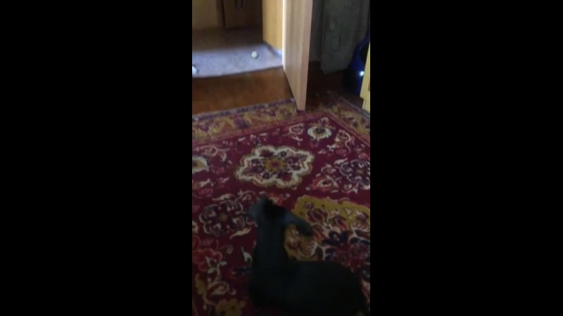 Видео от Эльвиры Никиташовой 720p mp4