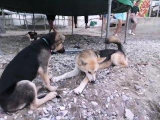 Моя Хвостатая Любовь - помощь животным kullanıcısından video