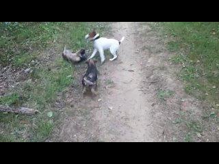Video by Yury Matveev
