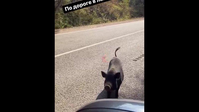 Очаровательная встреча по дороге