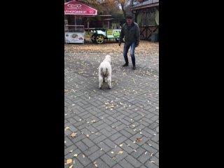 В Пензенском зоопарке новый обитатель - Лакомка. Д...