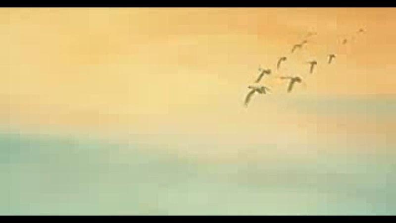 Видео от БиблиоМир ННГАСУ