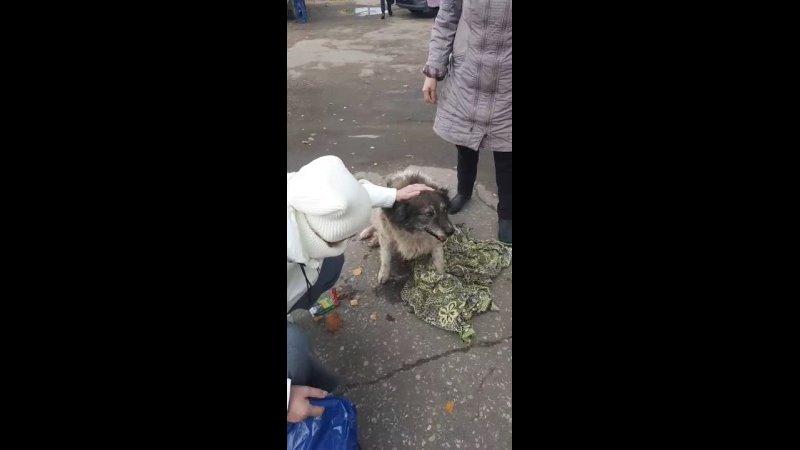 Видео от Приют для животных в городе Гусь Хрустальный