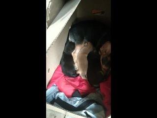 Спасите собачку мелкую, до слёз жалко. Тел 8903348...