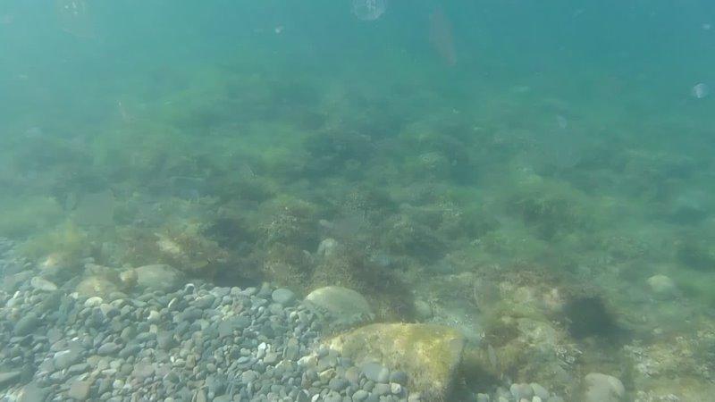 Подводная Одиссея Жак Ив Кусто 23 08 2021 1