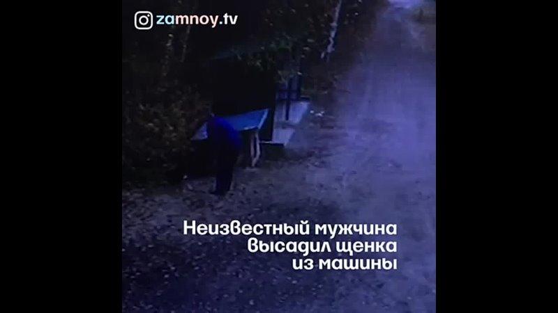 Видео от БФ Сень Сотен Крыльев