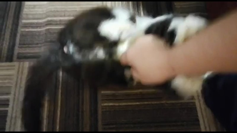 Видео от РЯДОМ помощь бездомным животным Н Ломова