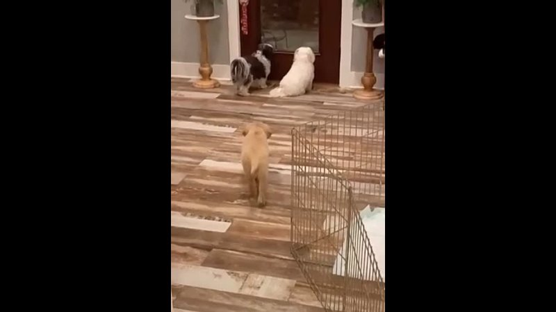 I've never seen a puppy pranking his nosey siblings