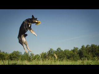 CARIBOU You Can Do It Official Video_1080p_MUX