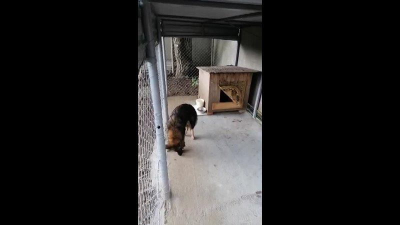 Видео от Оли Пикетт