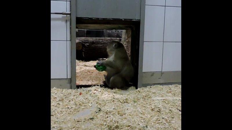 Видео от Ярославский зоопарк Yaroslavl zoo ©