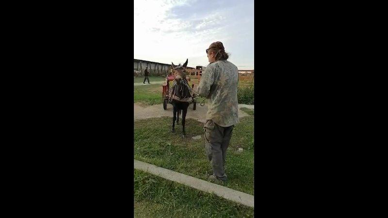 Видео от Игоря Дубова