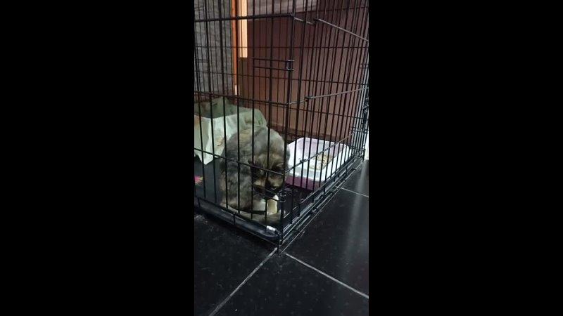 Видео от НАДЕЖДА Помощь бездомным животным Казань