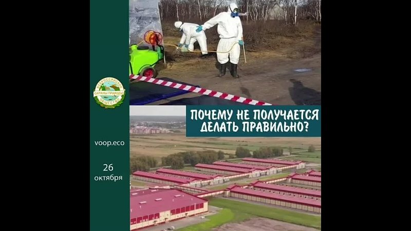 В Тюменской области сжигают кур вместе с шинами