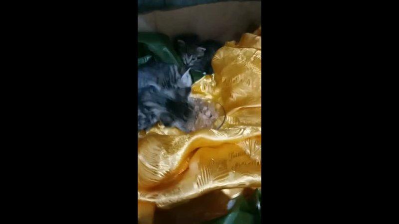Видео от Фудшеринг Отдам даром еду