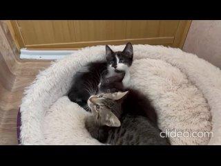 Три чудесных маленьких котёнка ищут свои дома