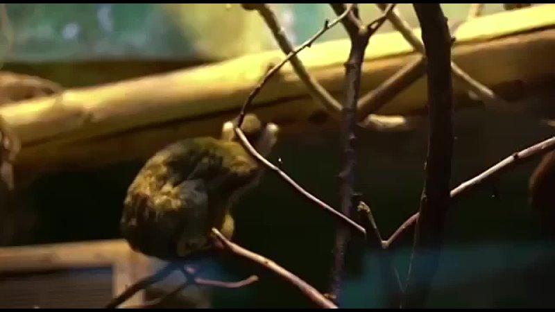 Видео от На Семи Холмах