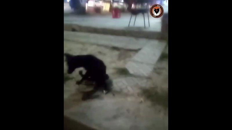 Видео от Хаёт Приют для бездомных собак в Ташкенте