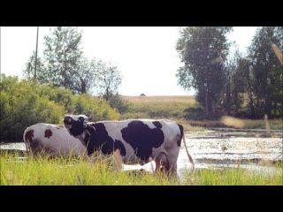 Sinegorski Dom-Kulturitan video