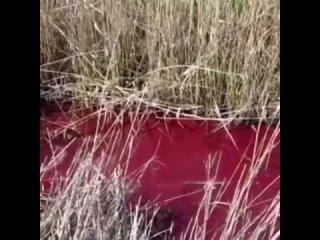 Река Албаши в станице Новоминской Каневского района внезапно окрасилась в ярко-красный цвет.